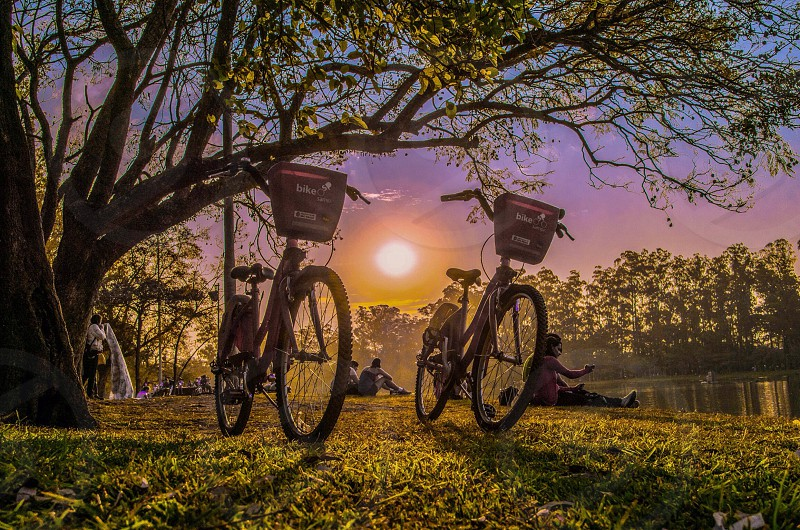 Two bikes with baskets on the grass photo