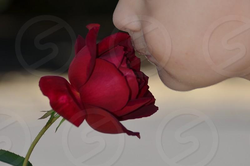 Child Rose  photo