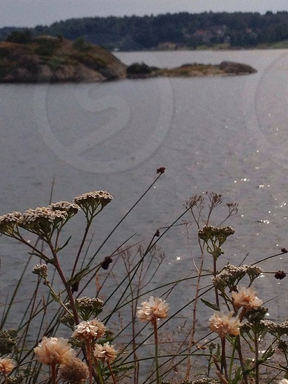 beige flower near the river photo