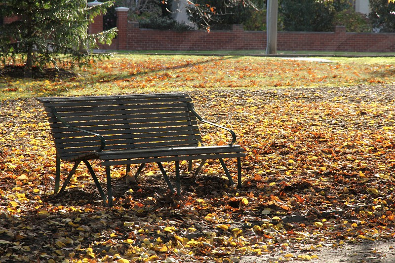 Empty park bench in park with golden autumn leaves on ground late afternoon light photo