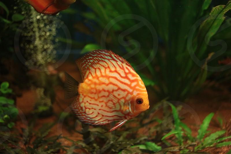 Exotic fish aquarium sea colored photo