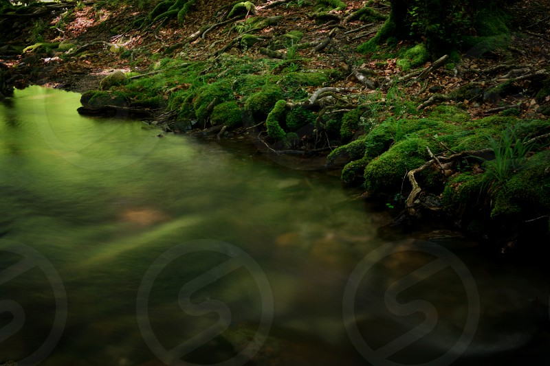 body of water along land form with moss in a forest like environment outdoors photo