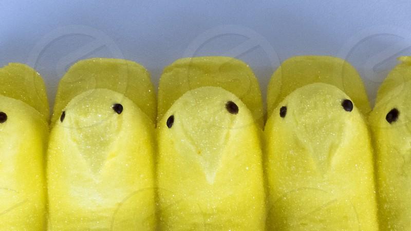 Easter Treats - Peeps  photo