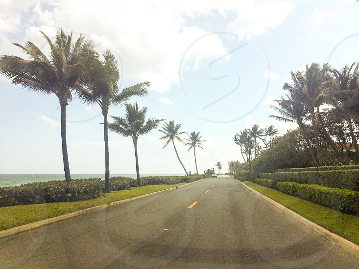 Trees road coast seaside driving roadtrip free freedom summer happy life tropical Florida USA America beach sunny open road  photo