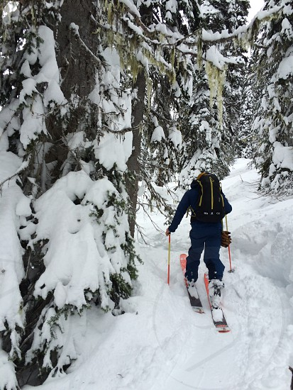 Chris Reuben's touring through a mossy forest with Capow Guiding photo