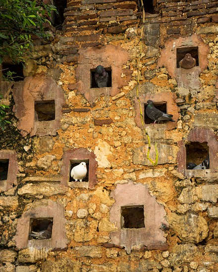 Pigeons gather and nest in their ocean view condos in Parque las Palomas Viejo San Juan Puerto Rico. photo
