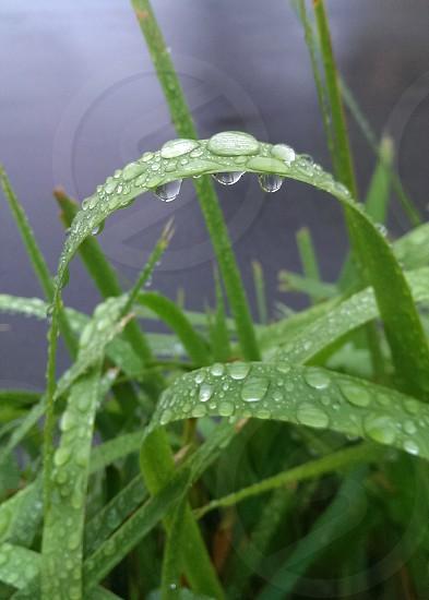 Green Raindrops photo