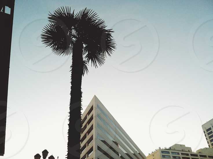 tall tree in front of white building photo