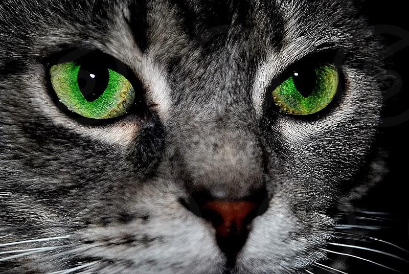 "My cat ""Milkshake"" beautiful green eyes.  photo"