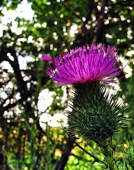 Gorgeous flower park nature  photo
