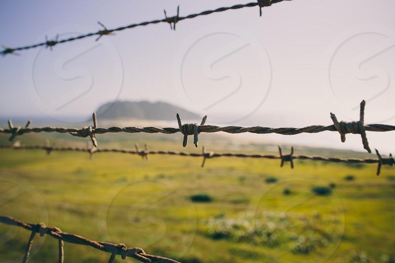 silver barb wire  photo
