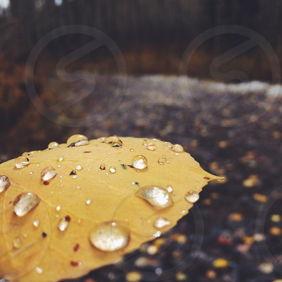 brown leaf with raindrops photo