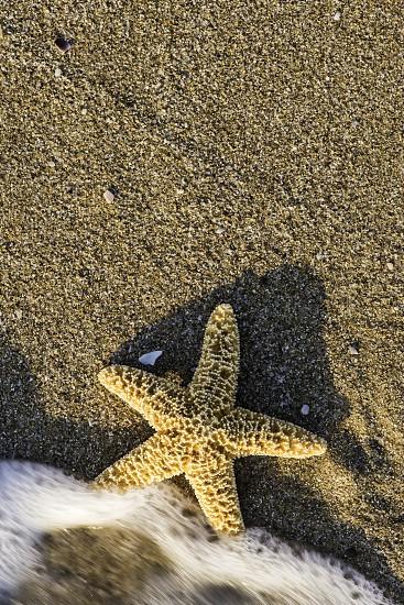 Sunrise on the beach. Starfish photo
