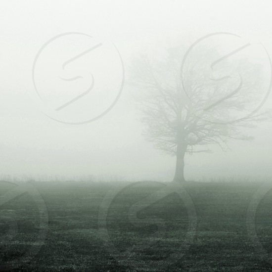 tree in foggy field photo