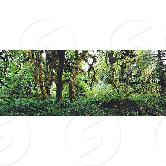 forest view photo