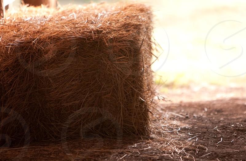 Hay Hay bales Farm life farms feed  photo