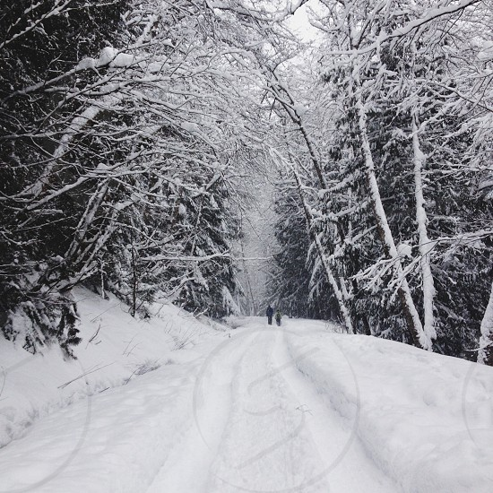 Snowshoeing in winter photo