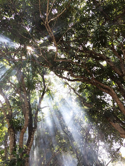 sunrays tree canopy low angle photo photo
