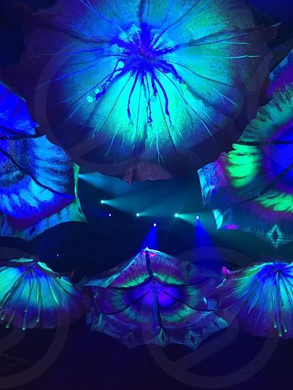 green and blueu LED umbrellas photo
