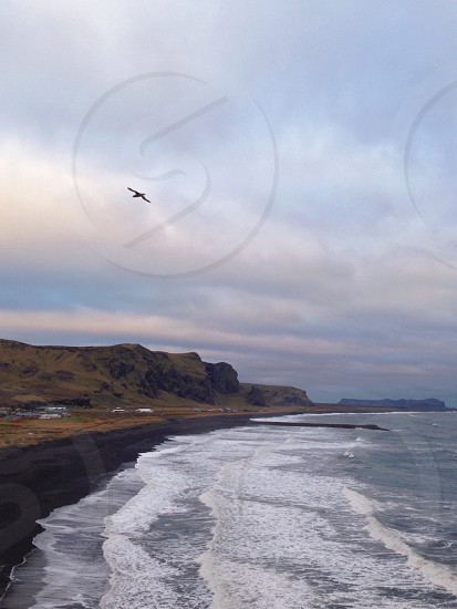 A seagull flies above the ocean near cliffs and black sand beaches in Iceland. photo