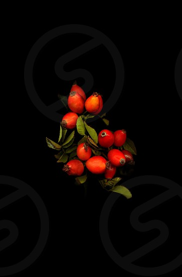 The branch with the fruits of wild rose on a black background photo