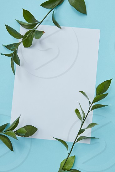 Decorative white frame on a blue background decorated in corners with green branches photo