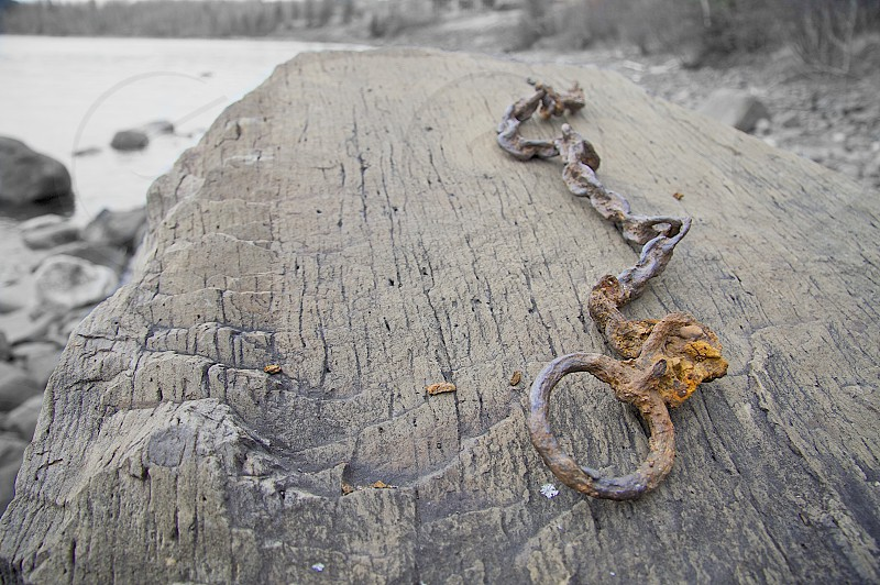 driftwood with iron chain photo