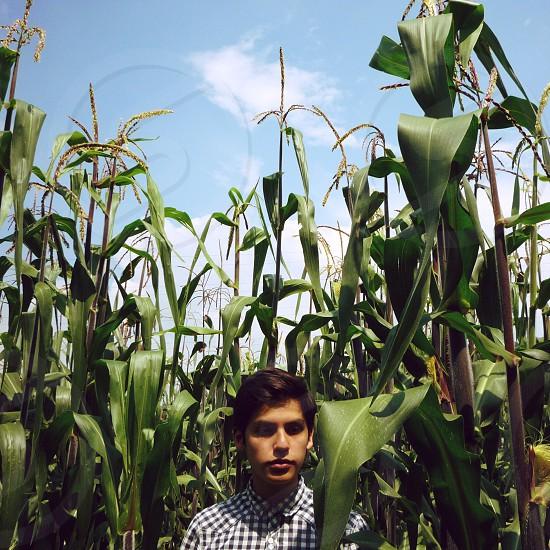 man standing on corn fields photo