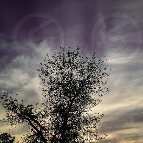 dramatic sky and tree photo