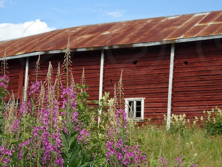 view of purple flower plant photo