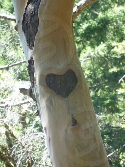 heart love romance valentine emotions feelings tree nature photo