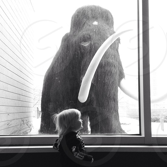boy watching mammoth in the window  photo