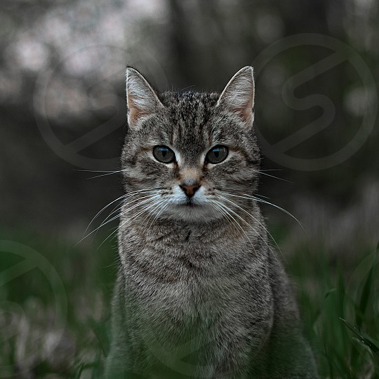Domestic cat photo