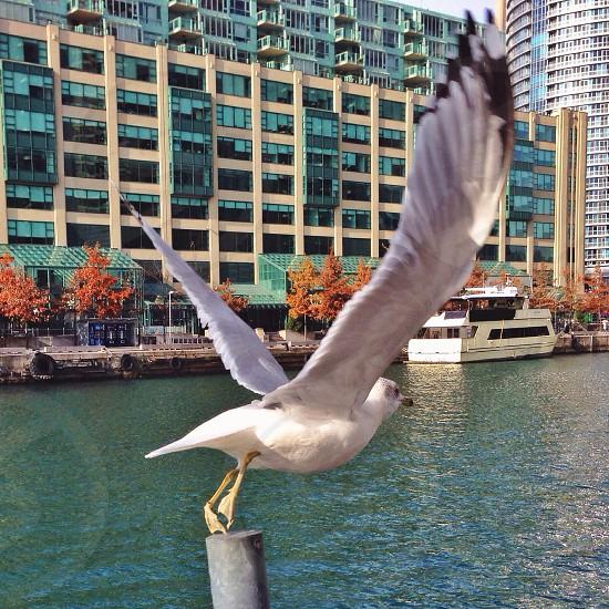 Flee Toronto photo