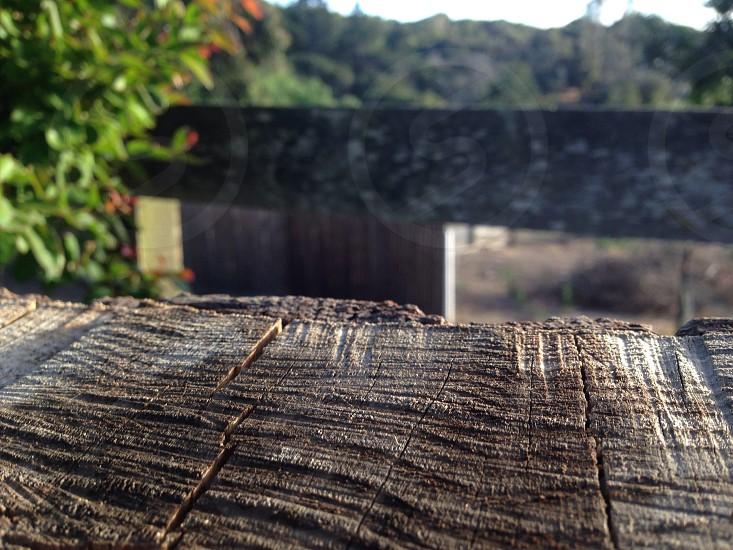Prunedale Ca.  photo