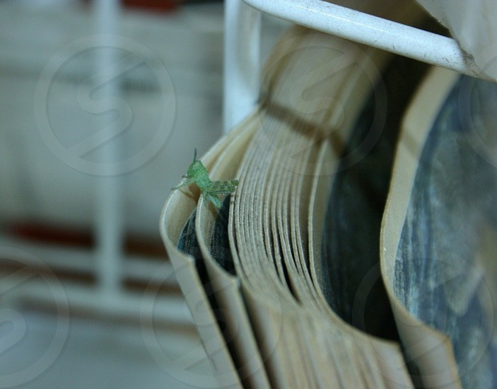 green grasshopper on paper photo