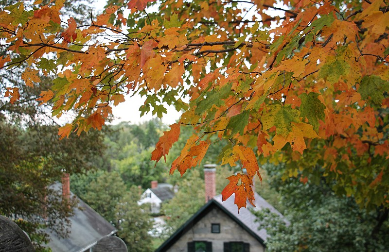 Bright orange autumn leaves in the foreground in front of a house. photo