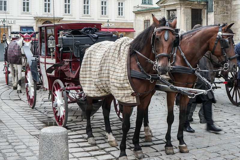 Horse and Carriage for Hire in Vienna photo