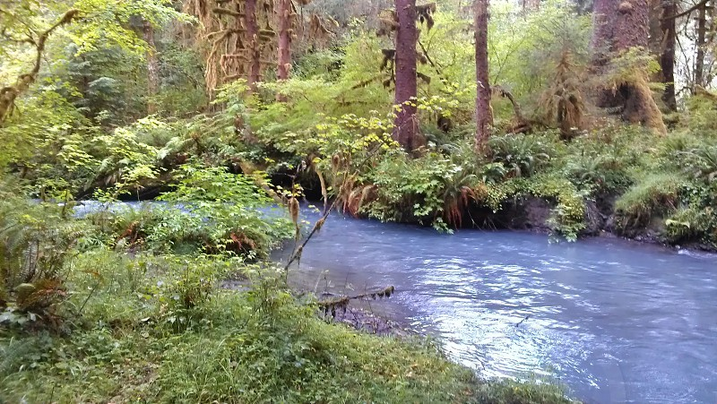 Hoh R5iver / rainforest in Washington.  photo