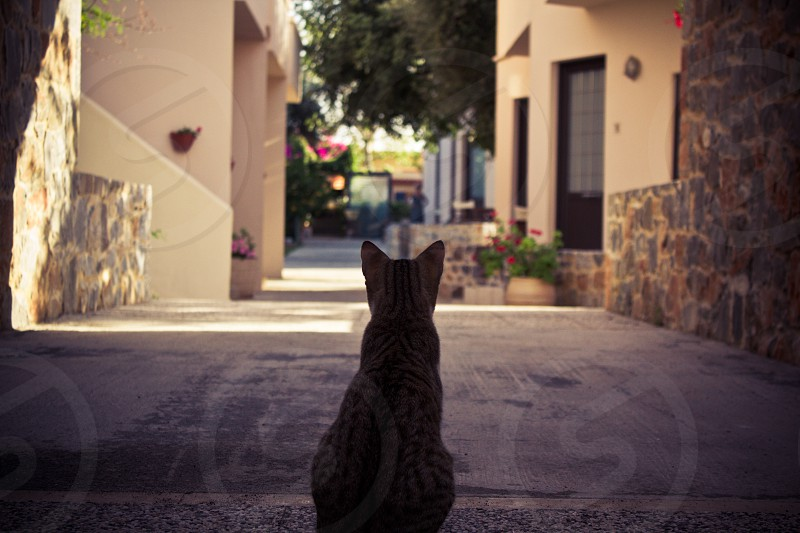 A stray cat in Greece on the lookout. photo