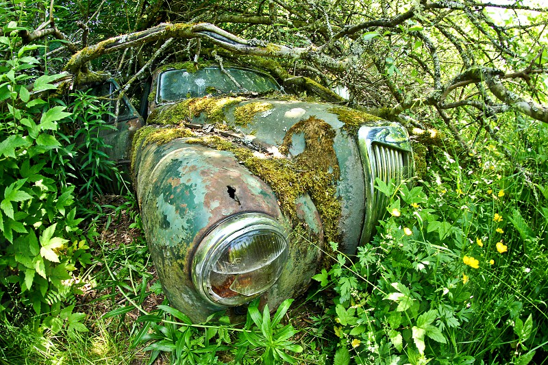 The abandoned car cemetery hidden deep in Swedish forests. Nature is slowly taking control.  photo
