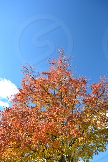Tree background with blue sky and clouds photo
