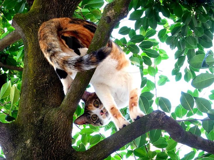 cat on top of tree photo