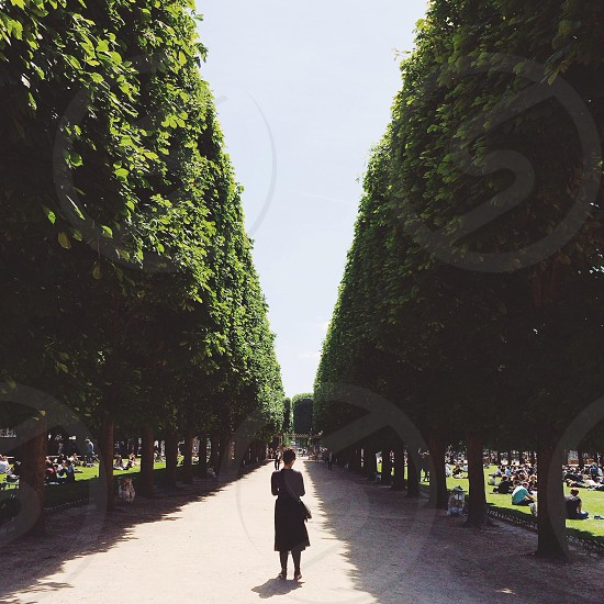 woman standing along tree lined park path photo