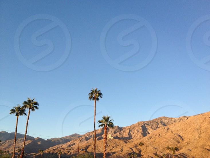 tall palm trees near brown mountain ranges photo