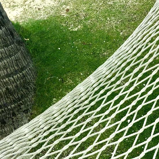 Hammock rope grass lawn tree nap relax angle vacation  photo