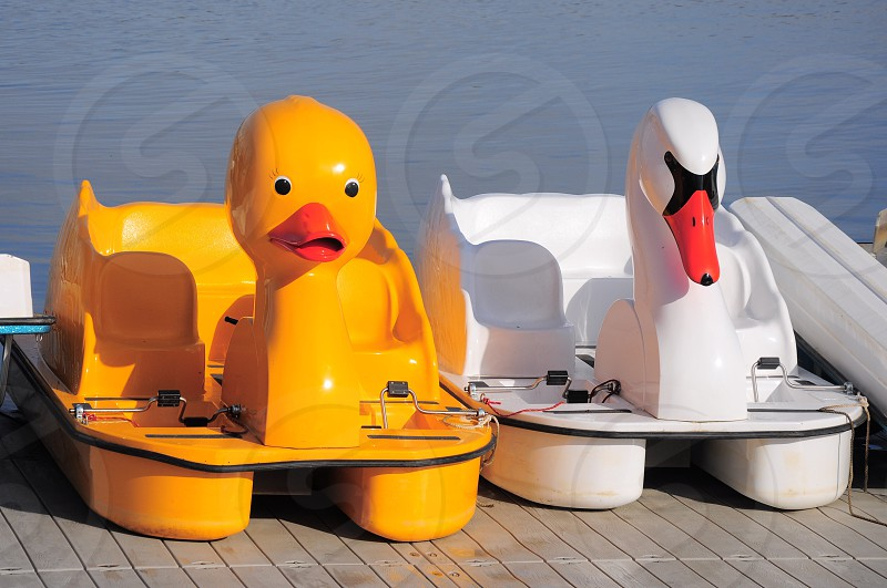 duck and swan paddle boat photo