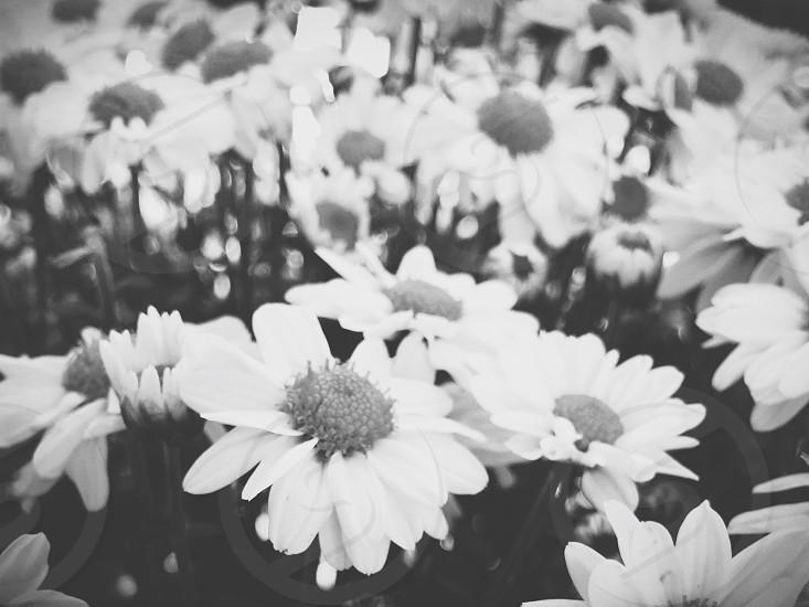 Flowers emotion photo