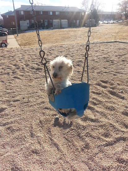 Dog swinging in the park. photo
