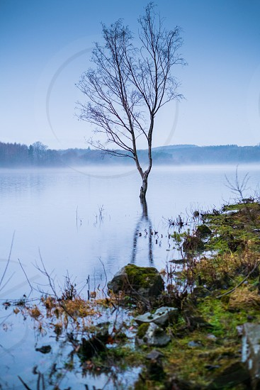 Beach tree flooded on a lake side in the winter with a light mist in the air photo